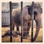 The Oregon Zoo's new baby elephant, Lily