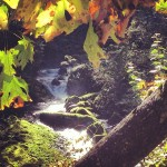 Hiking in the Columbia River Gorge during Fall.