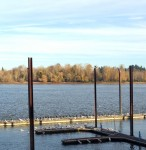 Birds lined up by species on the Willamette River in Portland, Oregon
